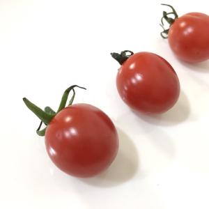 しわしわになったプチトマトを復活させる簡単裏ワザの効果がスゴすぎた!