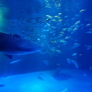 【能登の観光スポット】「のとじま水族館」が予想以上に楽しかった!