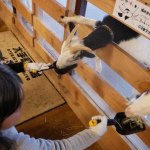 【体験レポ】東京駅から徒歩1分で牧場に!「大手町牧場」は子連れで楽しめるスポット♡