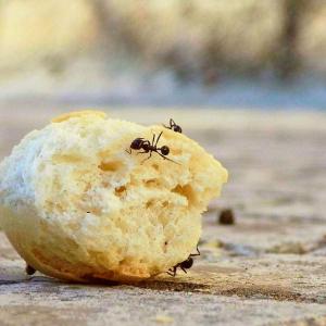 """【メキシコの害虫対策】に学ぶ!蟻を家に侵入させない方法とは?日本でも""""使える""""!"""
