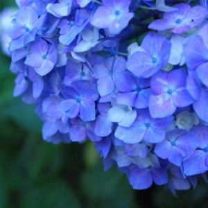 ジトジトベタベタ憂鬱な梅雨時期は美しい紫陽花(あじさい)グッズで乗り切ろう!