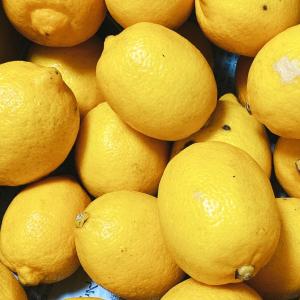 朝から飲みたい「レモン白湯」。便秘解消、むくみ防止、代謝アップなど女性に嬉しい効果が期待!