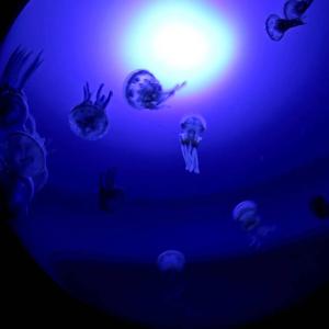 池袋サンシャイン水族館の新エリア『海月空感』オープン|まるでクラゲに包まれているよう幻想的な「クラゲパノラマ」