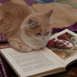 【猫好き必見】猫専門書店「神保町 にゃんこ堂」店長に聞く!おすすめのネコ本5選