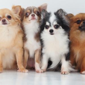 ペットは1匹だけでは可哀想?飼う前に確認したい犬や猫の「多頭飼い」のメリット&デメリット