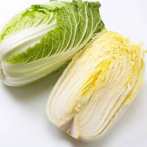 旬の白菜はこうすると旨味が増す!鮮度やおいしさを保つ方法は?白菜を使ったアレンジレシピも