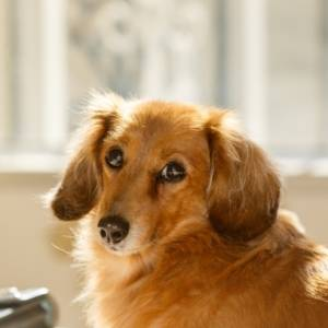 ペットを飼っている方必見!ペットの老化のサインと対策|大切な家族の一員だから確認してほしい