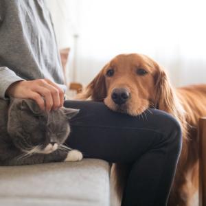 ペットを飼おうか悩んでいる方必見|動物を飼うと健康度が上がる?ぺットとの暮らしが与えてくれるメリット