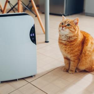 ペットがいる部屋、暑すぎない?ペットの健康のために冬に気をつけるべき3つのポイント