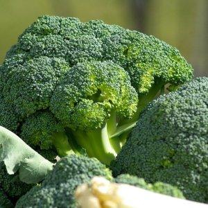 ブロッコリーを冷凍保存するなら生のままがおすすめ!ブロッコリーの見分け方と保存方法#野菜ソムリエいけごまの知恵袋