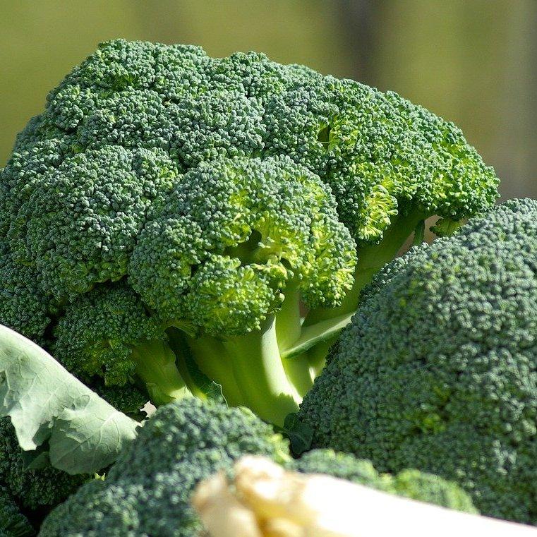 おいしいブロッコリーの見分け方と保存方法 #野菜ソムリエいけごまの知恵袋