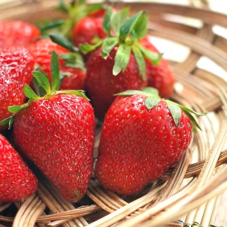おいしいイチゴの選び方と保存方法 #野菜ソムリエいけごまの知恵袋