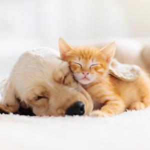アレルギーがあっても犬や猫を飼いたい!マンションでも飼いやすいおすすめ犬種&猫種