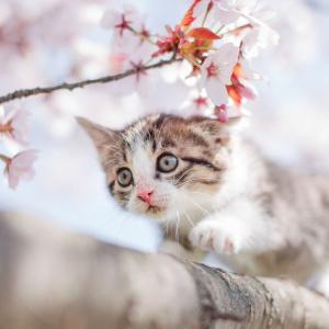 春に注意すべきペットに迫る3つの危険|猫もフィラリア症にかかる!?