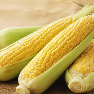 【料理の裏ワザ】トウモロコシの皮をむいてレンチンしてない?甘さをキープできる下処理法!冷凍の仕方も