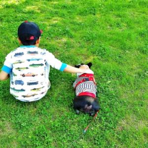 """【触ってはいけない犬はこんな犬】 ママになったら知りたい子どもに教えておくべき""""犬に近づくマナー"""""""