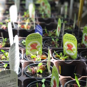 おもしろ可愛い♡ 夏休みの自由研究にもぴったりな【食虫植物】にハマる親子続出!