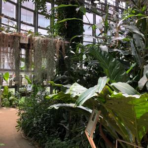 入場料100円の都会のオアシス「渋谷区ふれあい植物センター」が極上の癒しスポットだった件